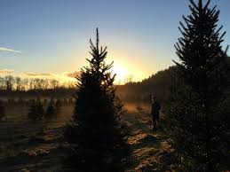 thrifty thurston visits thurston county christmas tree farms