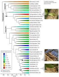 Trees And Their Meanings by The Origin Of Grasshoppers Katydids And Crickets A New Study