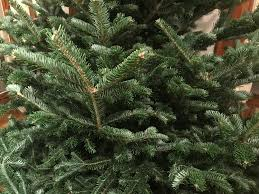 Cut Your Own Christmas Tree Archives The Devins Network