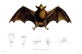 Bathtub Battleship Wood Look Plastic Baseball Bat Images Of A Baton Animal