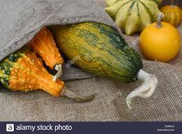 ornamental gourds cucurbita pepo stock photos ornamental gourds