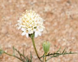 native plant species in the desert why some plant species are survivors