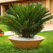 get the look showcase your planters home infatuation blog