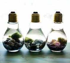 How To Make A Light Bulb Easy Diy Light Bulb Aquarium Marimo Moss Ball Marimo And Diy Light