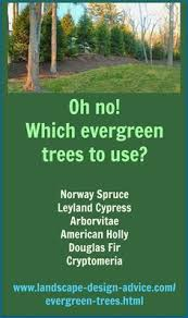 Evergreen Landscaping Ideas 25 Unique Evergreen Landscape Ideas On Pinterest Blue Spruce