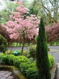 cherry blossom tree in the backyard yard decor pinterest