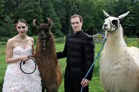 themed weddings llama themed weddings and simon s llama nuptials