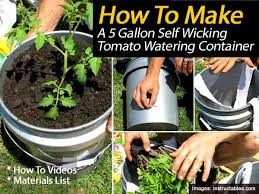 Diy Self Watering Herb Garden How To Build A 5 Gallon Self Wicking Tomato Watering Container
