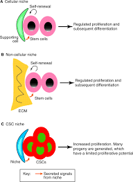 stem cells and their niche an inseparable relationship development