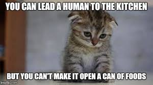 Sad Kitten Meme - sad kitten memes imgflip