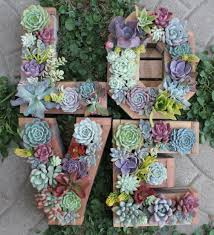 How To Make A Succulent Wall Garden by 30 Ways To Create An Enchanted Succulent Garden In Your Backyard