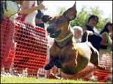 'Salsicha' é o cão mais feroz do mundo, diz estudo