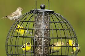 attracting birds gardener u0027s supply