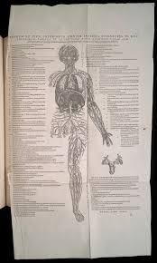 He Made Accurate Drawings Of The Human Anatomy Andreas Vesalius 1514 1564 Vaulted Treasures Historical