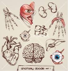 Human Anatomy Images Free Download 24 Best Human Anatomy Images On Pinterest Human Anatomy Anatomy