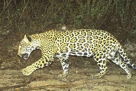 New Mexico wildlife images Citizen science pathways wildlife corridors of new mexico jpg