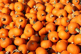 pumpkin screensaver fall wallpapers for android group 35