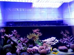 led aquarium lights for reef tanks acclimating your aquarium to led lighting orphek