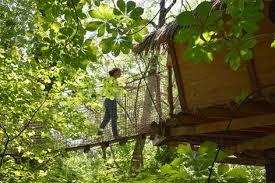 chambre d hote cabane dans les arbres cabanes chambres d hôtes et gîtes domaine des vaulx