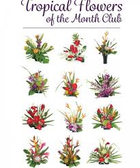 flower of the month club hawaiian flowers of the month with our aloha