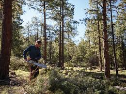 when u0027fixing the forest u0027 hits a tax snag the taos news