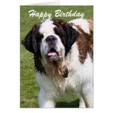 bernard birthday greeting cards zazzle