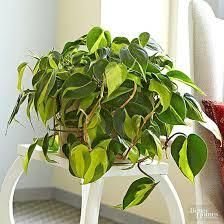 house plants low light indoor flowering plants low light prayer plant indoor flowering