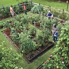 raise your own veggies vegetable garden veggies and raising