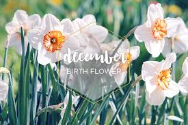 flowers of the month december birth flower narcissus ftd
