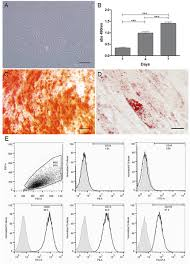 dermal substitutes support the growth of human skin derived