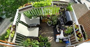 the 6x8 garden balcony garden update u2014 after a lot of rain