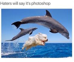 Funny Miami Dolphins Memes - haters will say its photoshopped funny animals