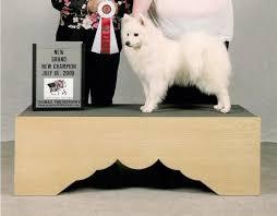 american eskimo dog breeders new england american eskimo dog