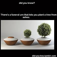 cremation tree a funeral urn that lets you plant a tree from ashes lion