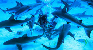 fin fin fighting to ban shark fin soup with guerrilla tactics from
