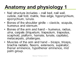 Beauty Therapy Anatomy And Physiology Unit N2 Provide Manicure Services Ppt Video Online Download