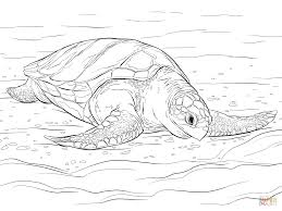 olive ridley sea turtle coloring page free printable coloring pages