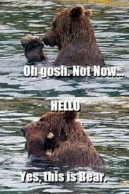 Bear Stuff Meme - funniest pictures of the week funny pictures bear meme and
