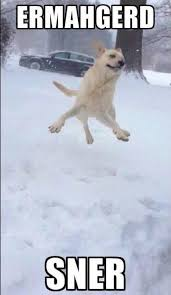 Funny Snow Meme - animals christmas dogs funny lol snow winter funny dogs