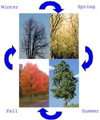 the age of the earth tree leaves as a clock calvin krogman