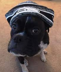 boxer dog upset stomach boxer dog calories requirements