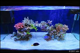 Reef Aquascape Designs Cube Aquascape Ideas Reef2reef Saltwater And Reef Aquarium Forum
