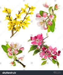 set spring flowers isolated on white stock photo 137060480