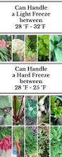 Fall Vegetables Garden by What To Grow When Cool Season Versus Warm Season Plants