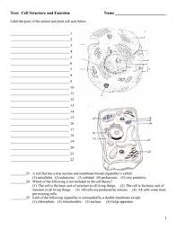 Cell Transport Skills Worksheet Answers Only Certain Carrier Proteins Are Allowed To Pass In Certain