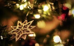 christmas tree flower lights wallpaper sunlight night branch christmas tree christmas