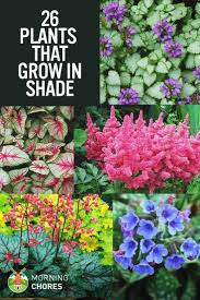 25 gorgeous shade tolerant plants that will bring your shaded