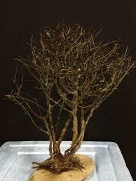 Aquascape Tree Aqua Scape Tree Wood Grade C M End 4 21 2018 5 09 Pm