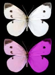 birds and bees of butterflies university of cincinnati