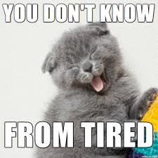 Too Tired Meme - too tired cat meme best tire 2018